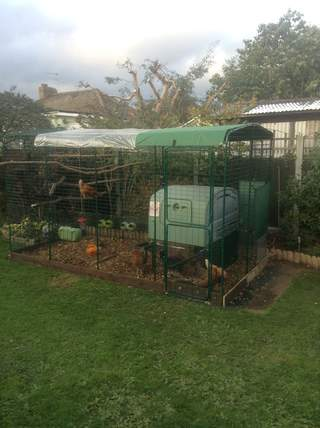 New 2x4x3 Chicken run installation complete