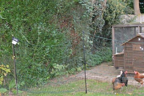 Omlet Chicken Fencing Chicken Keeping Equipment Omlet