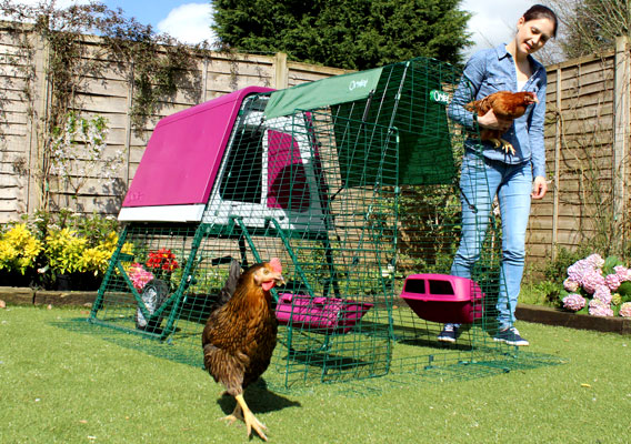 Eglu Go UP chicken house and run set up in garden with chickens roaming.