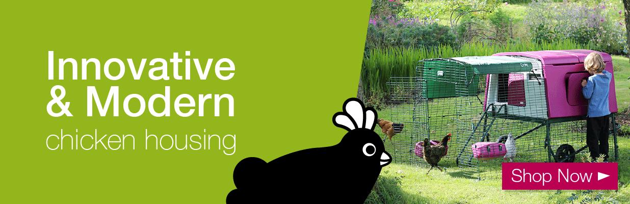 Dorking For Sale | Chickens | Breed Information | Omlet