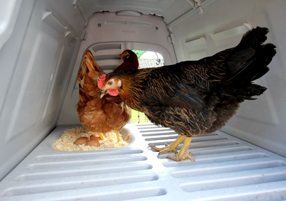 The interior of an Eglu Go chicken house.