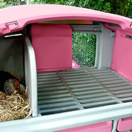 Roosting Bars And Nesting Box Of The Eglu Cube Chicken House