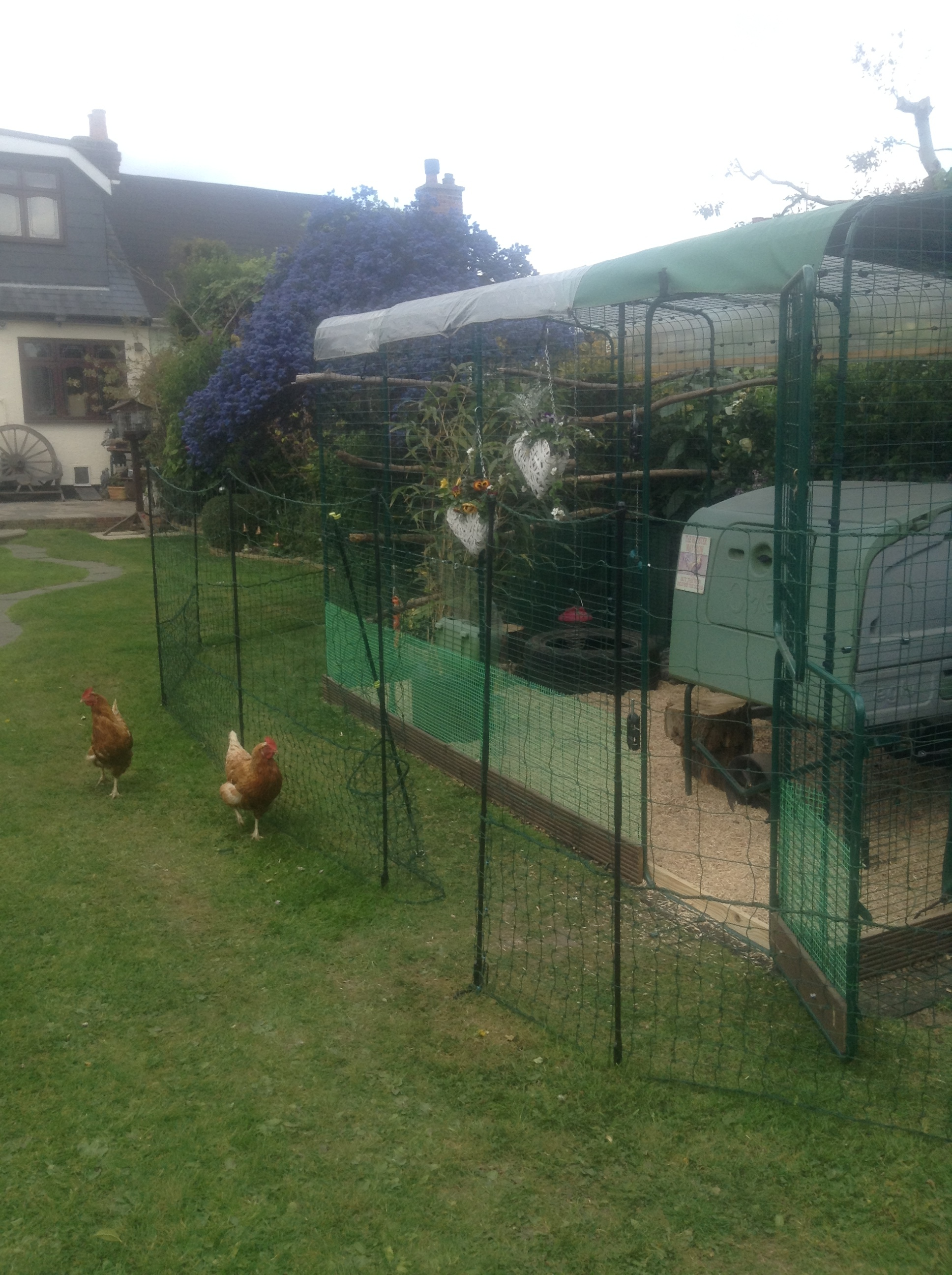 Omlet Chicken Fencing Chicken Coops And Pet Chicken