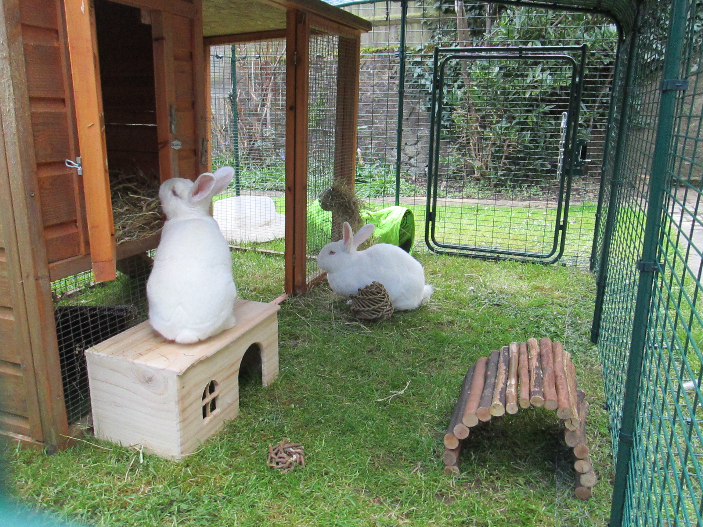 Outdoor Rabbit Run Rabbit Hutches Rabbit Runs And